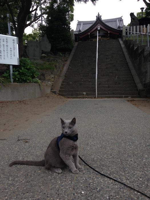 狛猫_b0167282_23305999.jpg