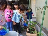 【南品川】みんなでトマトの苗を植えたよ_a0267292_17315059.jpg