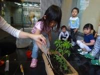 【南品川】みんなでトマトの苗を植えたよ_a0267292_17315092.jpg