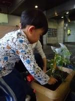 【南品川】みんなでトマトの苗を植えたよ_a0267292_17333330.jpg