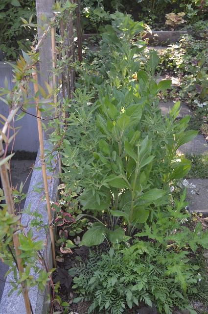 植物たちにとっての居心地の良い場所。_c0124100_234818100.jpg