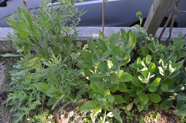 植物たちにとっての居心地の良い場所。_c0124100_23484275.jpg