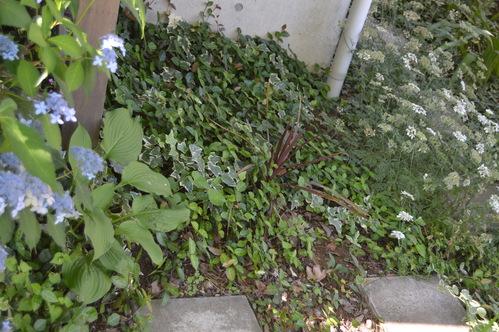 植物たちにとっての居心地の良い場所。_c0124100_2349582.jpg