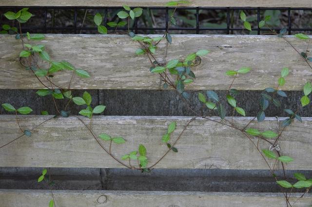 植物たちにとっての居心地の良い場所。_c0124100_2350565.jpg