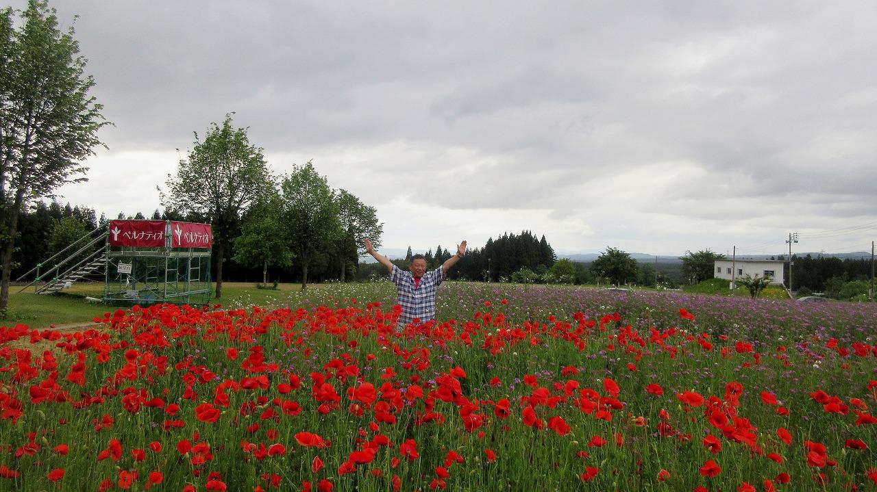 赤いけしの花/十日町当間高原 : くろかわ理事長町内会長ぶらぶらブログ