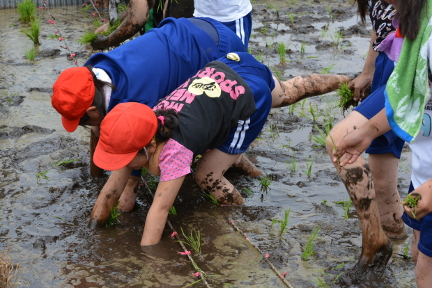 泥だらけの田植え体験!美味しいお米を作るのだ♪_c0259934_15212003.jpg