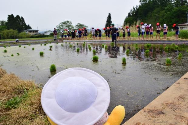 泥だらけの田植え体験!美味しいお米を作るのだ♪_c0259934_15212384.jpg