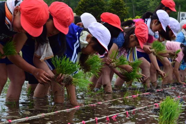 泥だらけの田植え体験!美味しいお米を作るのだ♪_c0259934_15271407.jpg