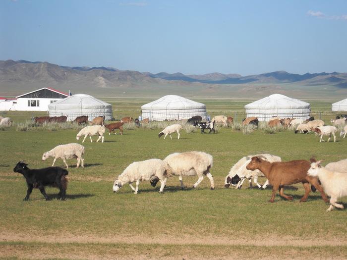 動物とたわむれるモンゴル旅行_a0109837_1741980.jpg
