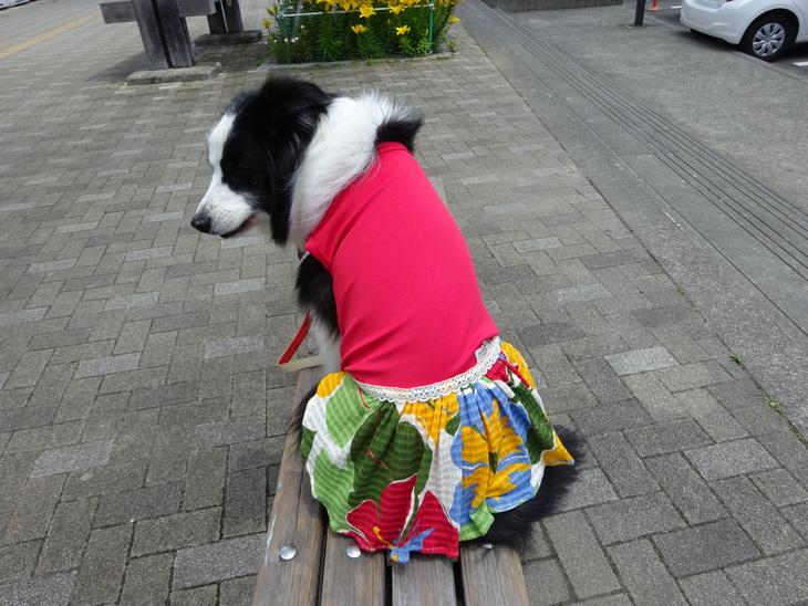 希望は「美魔女力UP」な服!?_b0177649_22183616.jpg