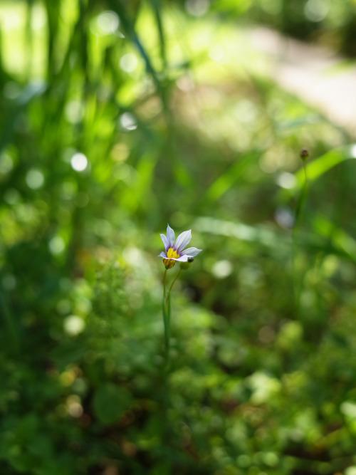 それでも花は咲いていく/前田健_f0134963_11335404.jpg