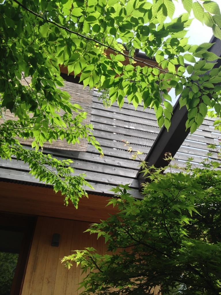 初夏の庭2016_c0310571_21341125.jpg
