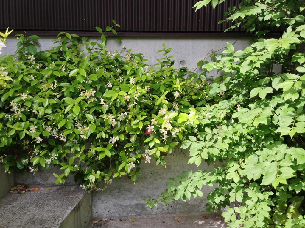 初夏の庭2016_c0310571_21341340.jpg