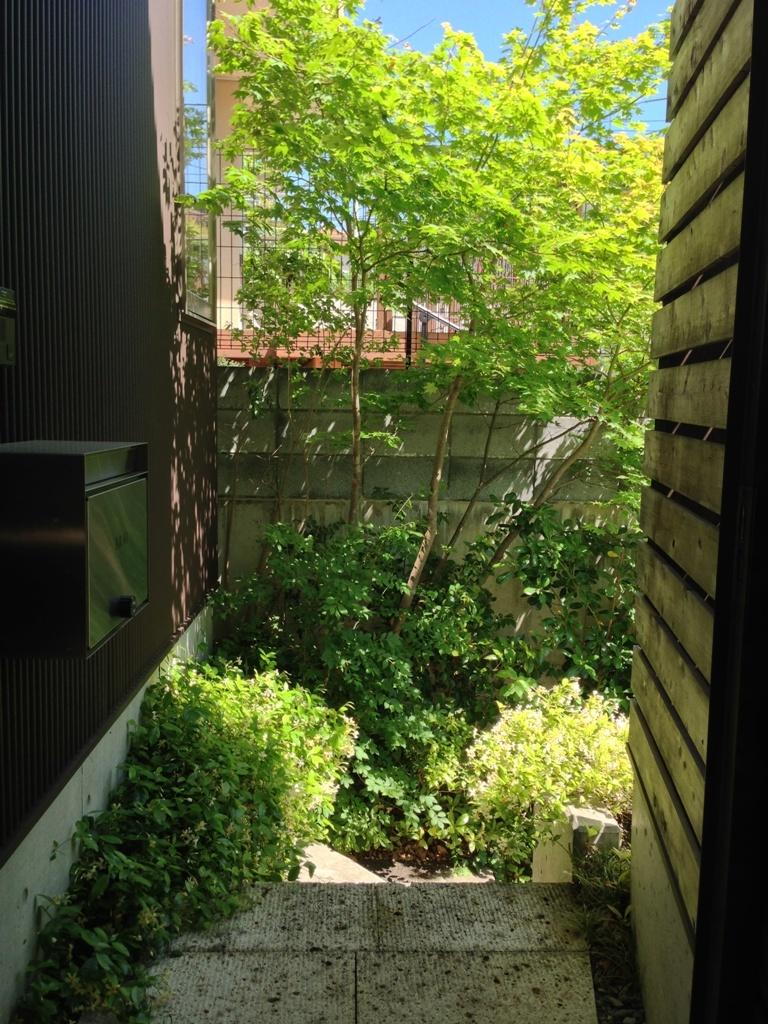初夏の庭2016_c0310571_21342489.jpg