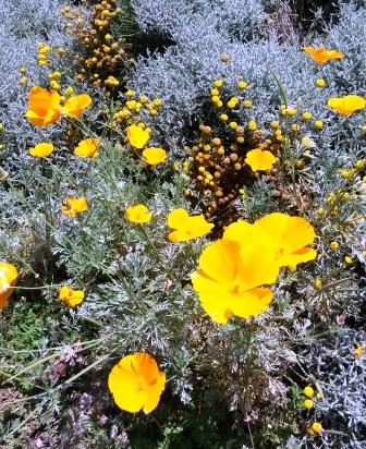 フラトン植物園の盆栽展_e0350971_14523837.jpg