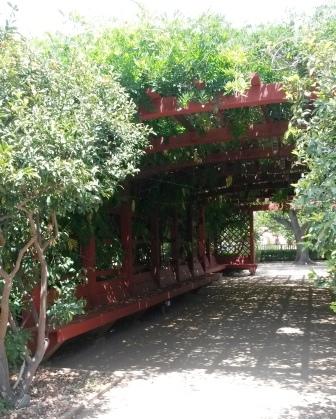 フラトン植物園の盆栽展_e0350971_14552234.jpg