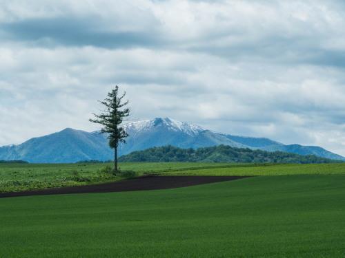 残雪の日高山脈と6月新緑の農村風景_f0276498_14374465.jpg