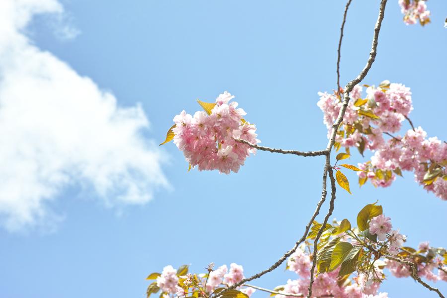 二本松市を歩く④~DP3も使いながら~_c0223825_03131312.jpg