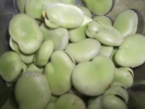 ジャガイモの収穫時期ですが_b0137932_173089.jpg