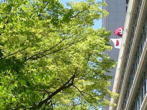 6月2日 広島県庁_a0317236_752142.jpg