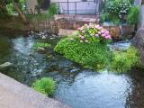 三島の湧水 2016_c0087349_572239.jpg