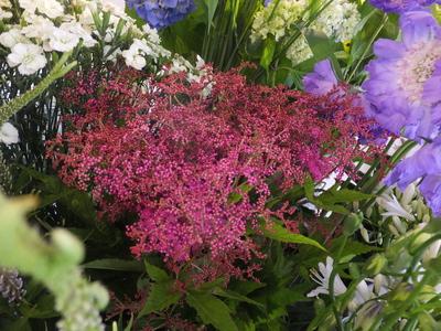 オークリーフ(水色の紫陽花)_f0049672_12155713.jpg