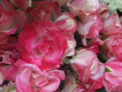 オークリーフ(水色の紫陽花)_f0049672_1216342.jpg
