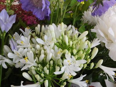 オークリーフ(水色の紫陽花)_f0049672_1216662.jpg