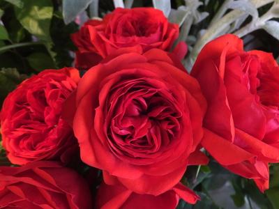 オークリーフ(水色の紫陽花)_f0049672_12171349.jpg