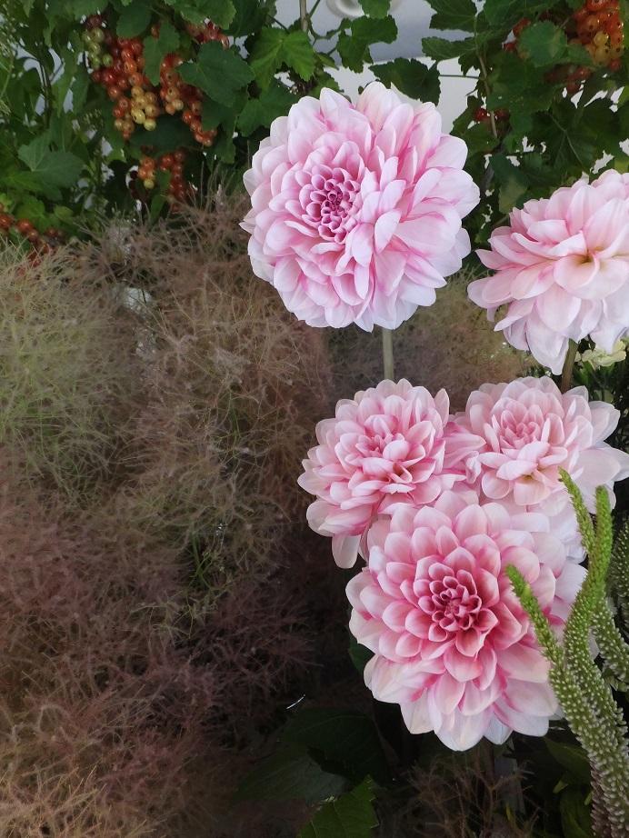 オークリーフ(水色の紫陽花)_f0049672_12182210.jpg