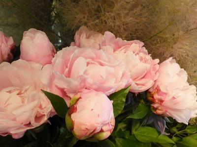 オークリーフ(水色の紫陽花)_f0049672_12183711.jpg