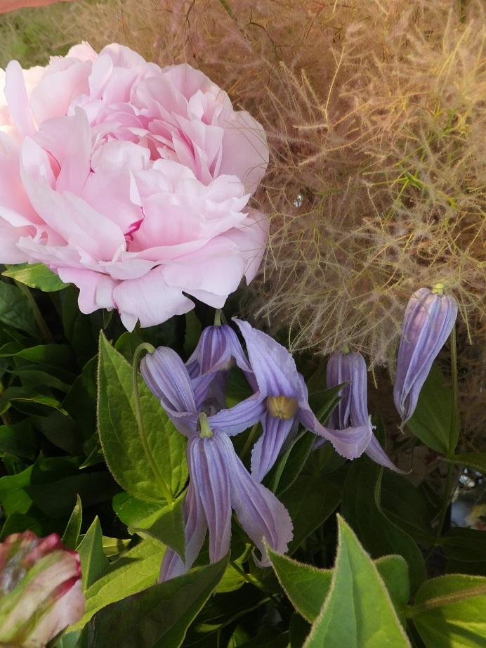 オークリーフ(水色の紫陽花)_f0049672_12184659.jpg