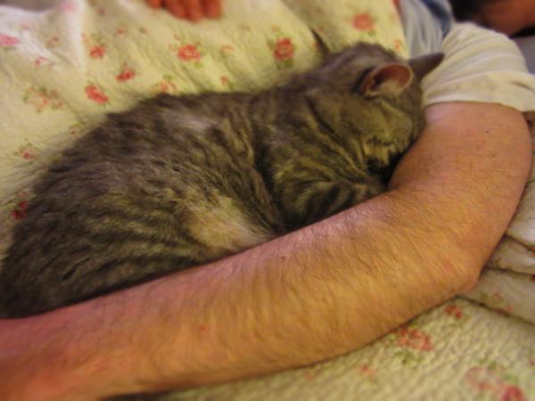 イタ猫FUJIの大好きな時間ー見ているだけで幸せ時間_c0179785_5341561.jpg
