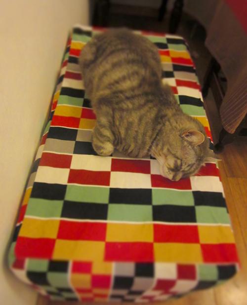 イタ猫FUJIの大好きな時間ー見ているだけで幸せ時間_c0179785_5361897.jpg