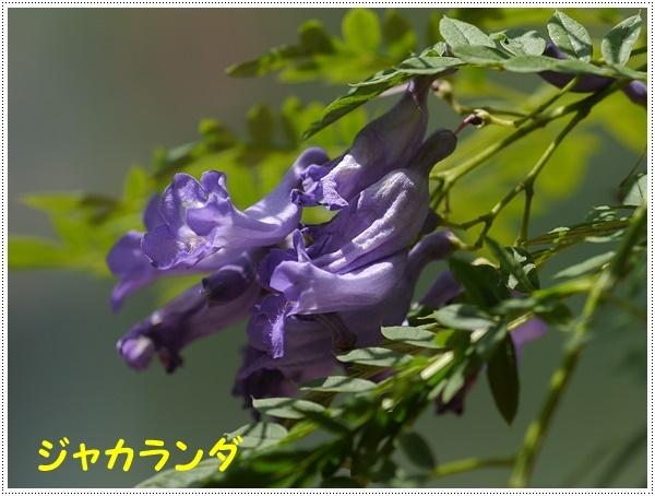 b0175688_00264365.jpg
