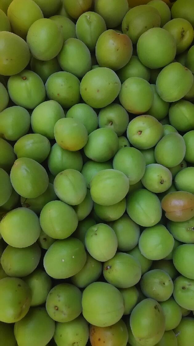 チャリティークッキーと梅の販売_d0154707_1214096.jpg
