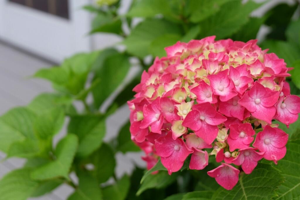 f0113108_20084793.jpg