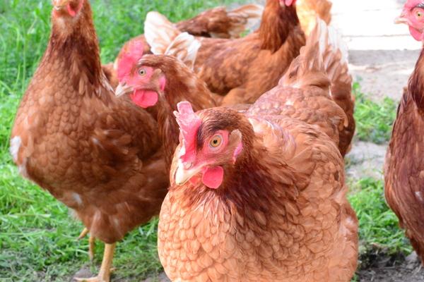 「卵と鶏銘柄についての考察 ④」 _a0120513_23501994.jpg