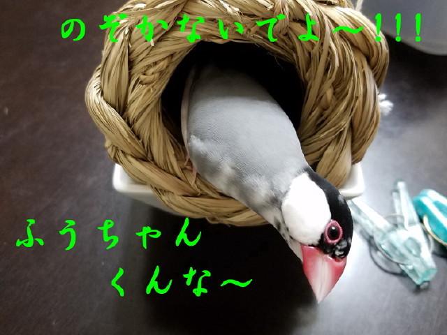 c0365734_21245497.jpg