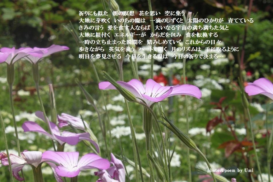 f0351844_15494220.jpg