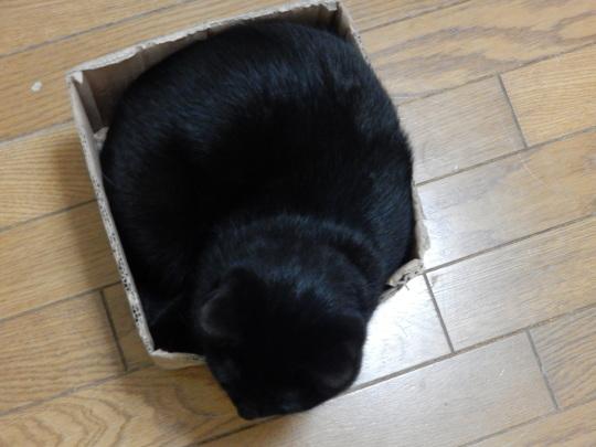 魅惑の箱_e0355177_19024382.jpg