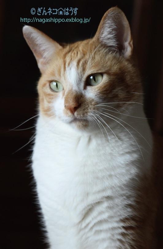 猫らしくない顔_a0333195_17373301.jpg