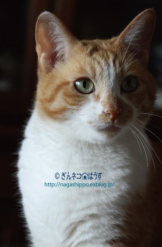 猫らしくない顔_a0333195_17395079.jpg
