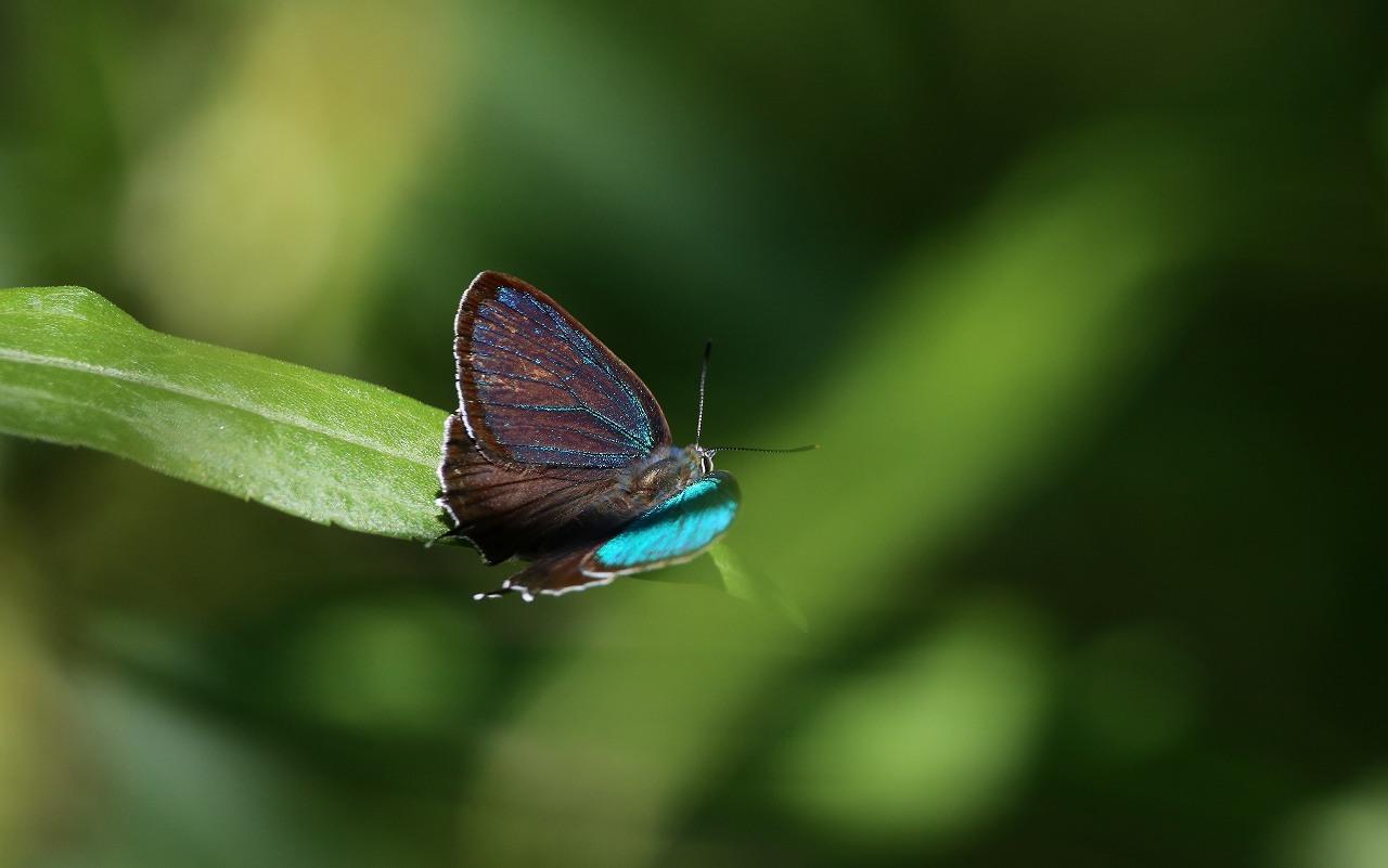 昆虫撮影その3_f0296999_18461674.jpg