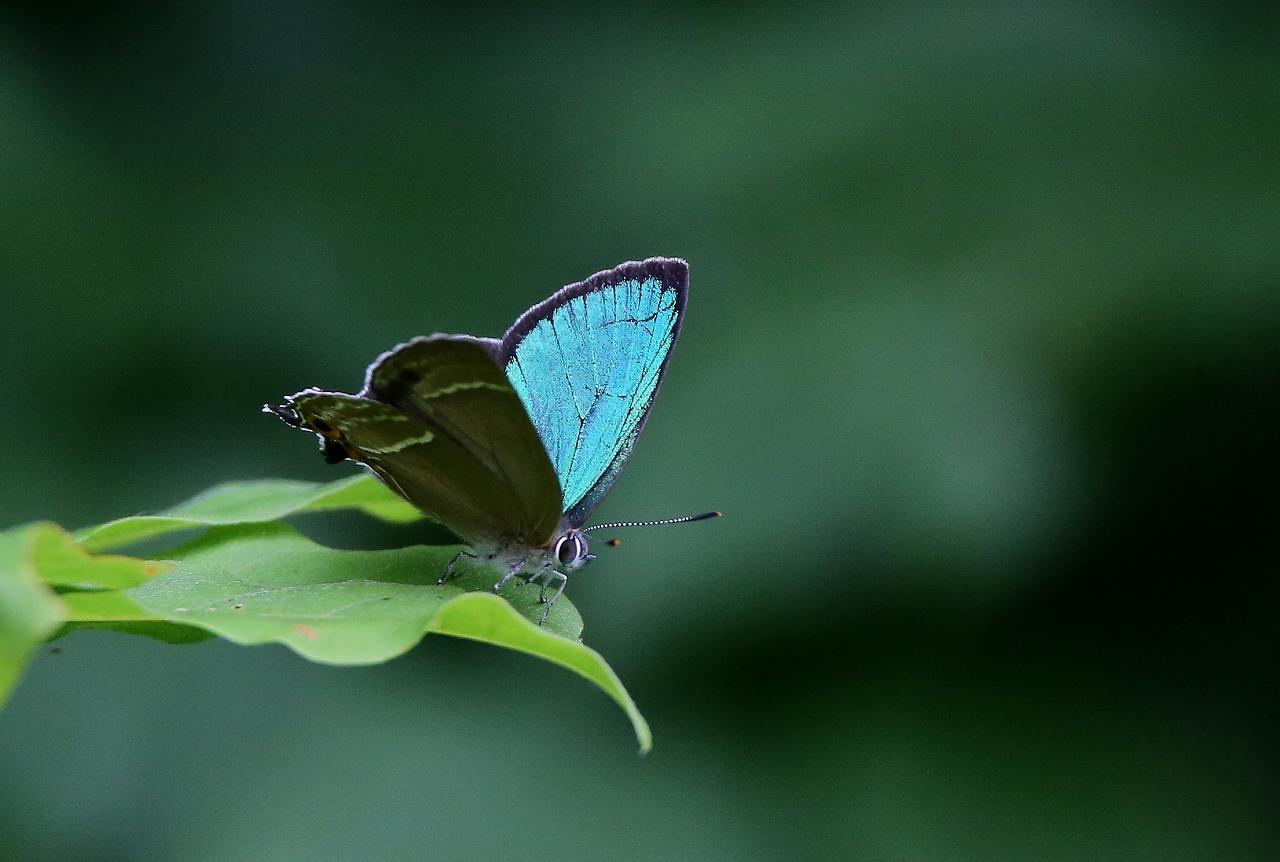 昆虫撮影その3_f0296999_18462185.jpg