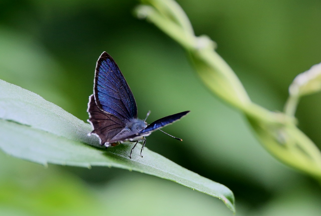 昆虫撮影その3_f0296999_1846481.jpg