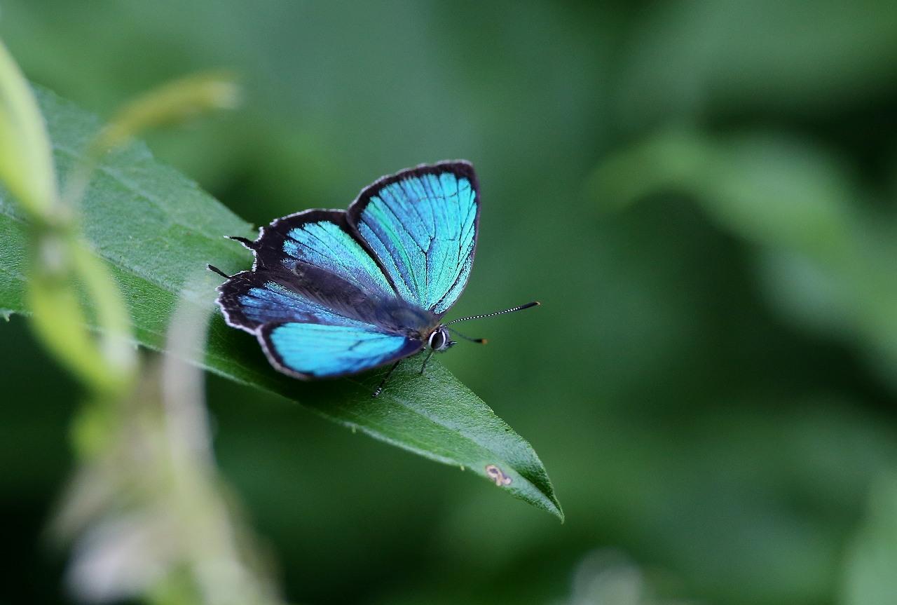 昆虫撮影その3_f0296999_18465943.jpg
