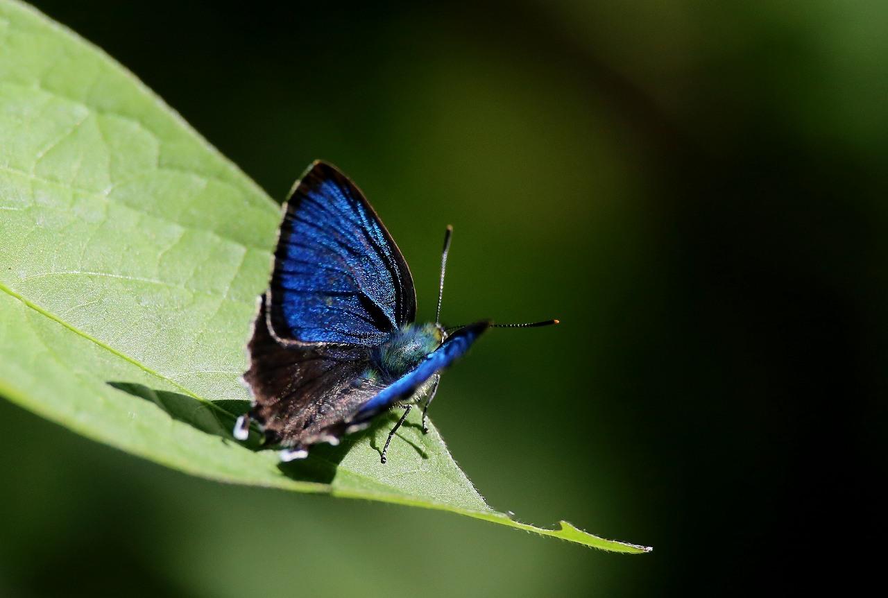 昆虫撮影その3_f0296999_18473957.jpg
