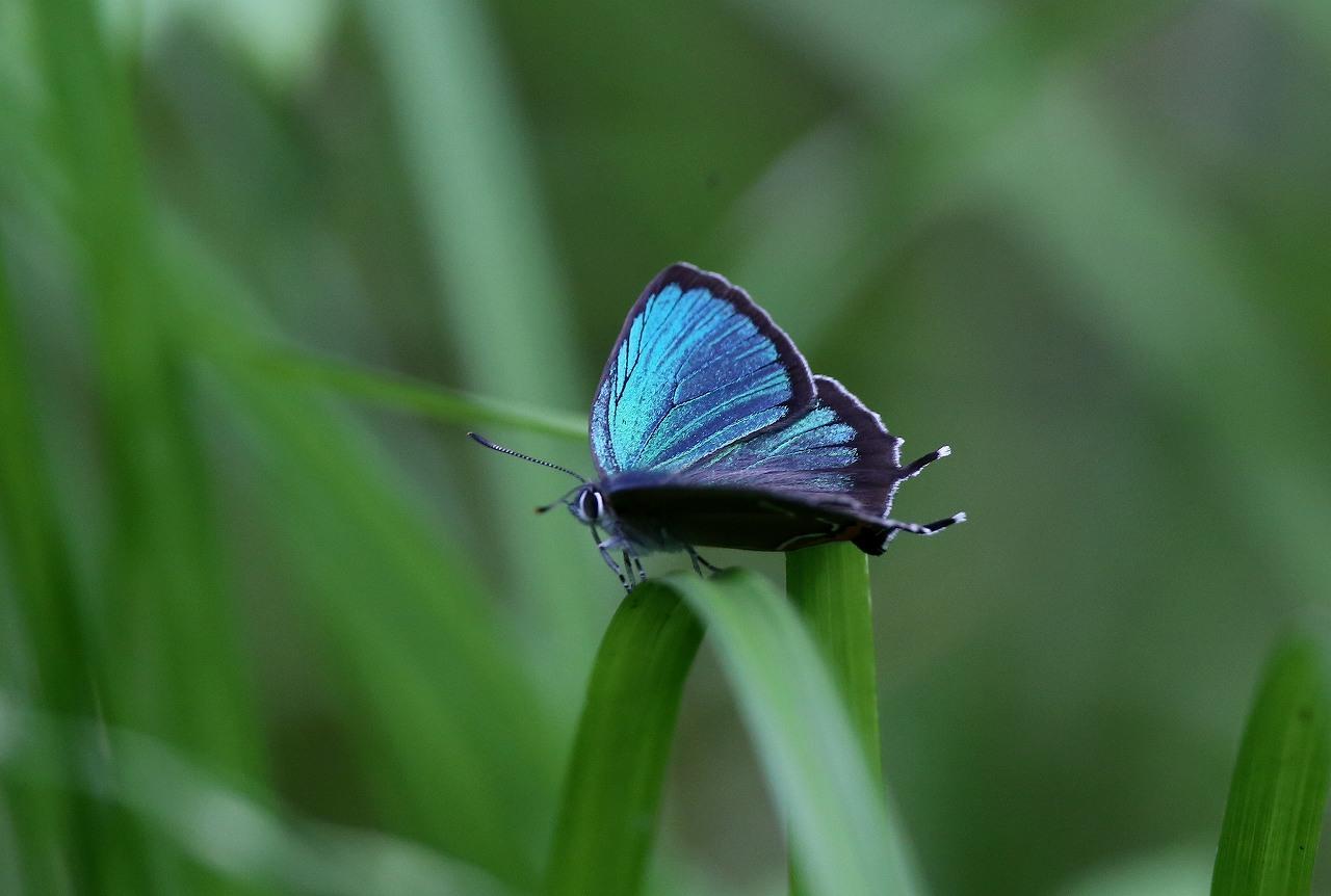 昆虫撮影その3_f0296999_1847831.jpg