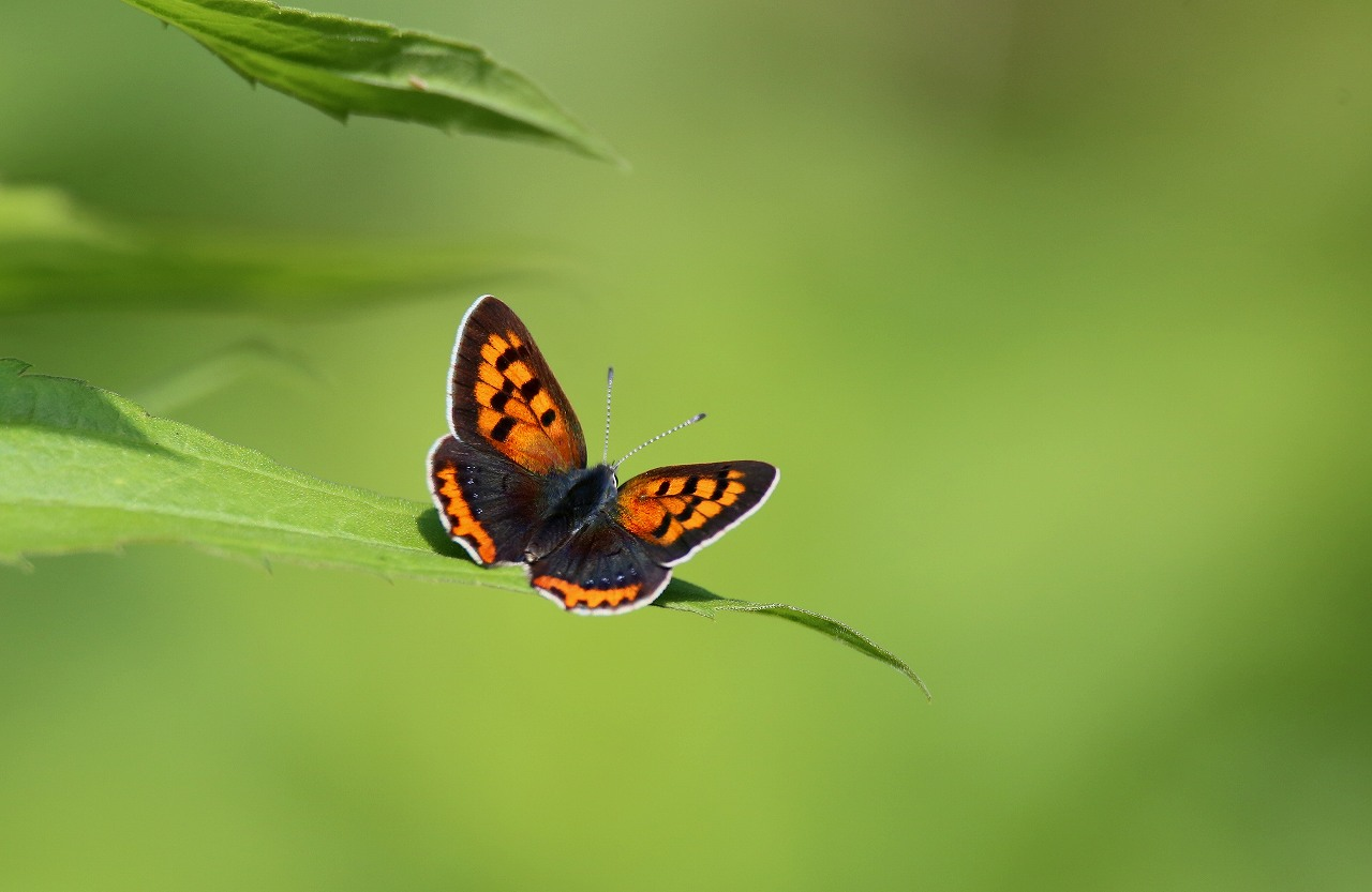 昆虫撮影その3_f0296999_18523779.jpg